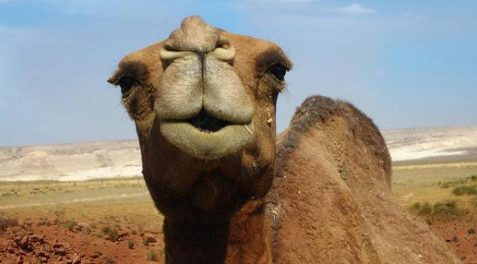 camel-mouth